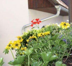 Urlaub Blumen Genuss Erlebnis bunt balkonblumen blakon gemütlich nächtigen übernachten Natur